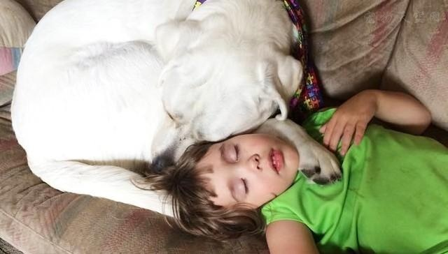 狗狗可以帮助解决 孩子老做噩梦的问题