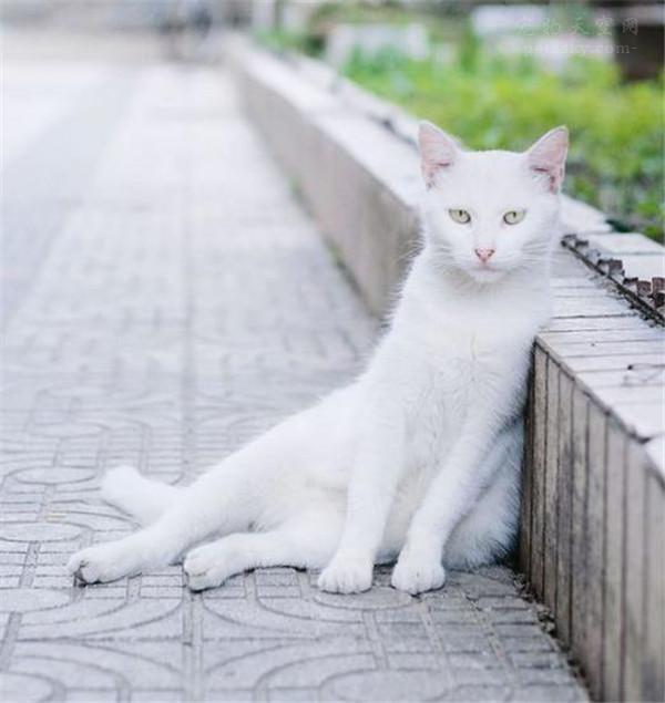 路边救了一只被自行车伤到的猫咪