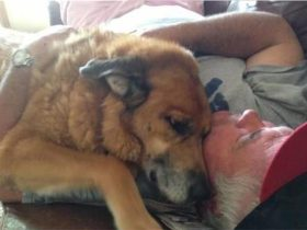 相伴15年的爱犬因病离世,主人收拾它的遗物时瞬间泪崩