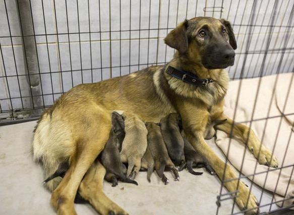 刚开始养宠物很有热情,过段时间就抛弃了,这是在行恶吗?