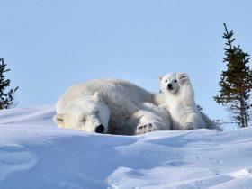 当南极变绿洲,当北极没有熊,不该是人类留给后代的世界