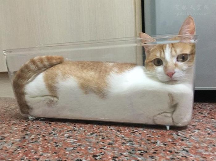 吸猫有益健康,什么意思?养猫的好处?