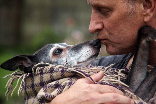 养过狗的人,你曾用何种方式与自己的宠物告别?