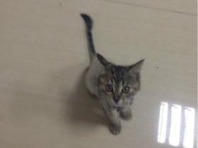 小哥偶然救助的冻僵小毛团,是只可爱的小美猫