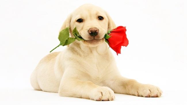 狗狗喜欢你的10种表现,测试你狗缘的时候到了