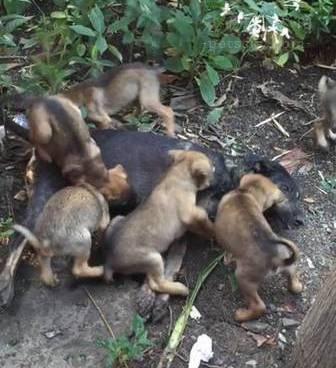 泰国一只流浪狗妈妈被人毒杀 村民悬赏5000泰铢缉凶