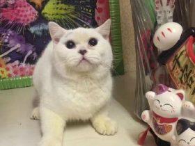 年轻女子在宠物店买猫退货遭拒后 将猫剥皮并丢弃在宠物店门口