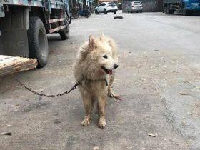 男子在菜市场买了一只脏兮兮的狗狗 救了一个小生命