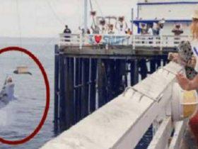 动保组织直播放生一只受伤康复的海豹 突发状况让观众惊呆