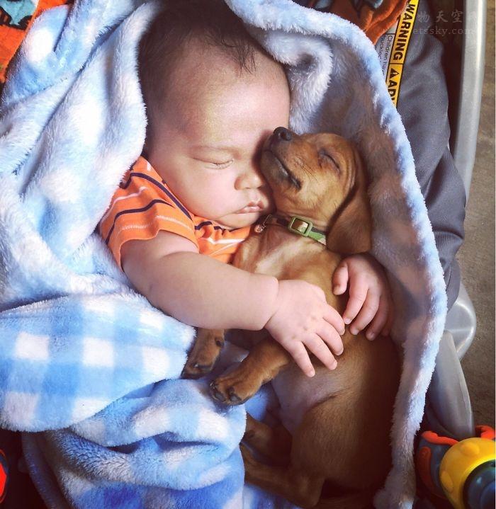 女儿要养狗,可我不想要,如何说服她呢?