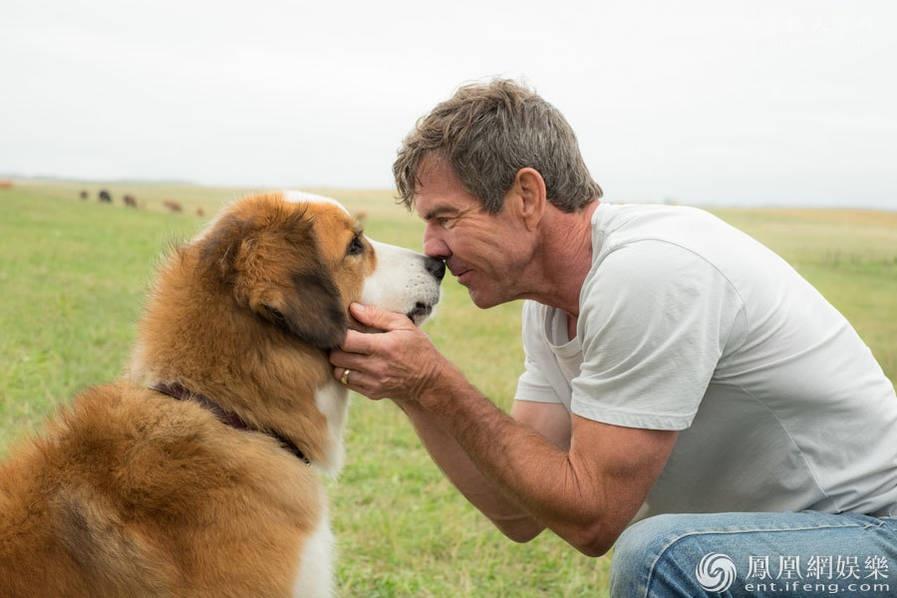 为什么越来越多人养狗,是对感情的寄托吗?