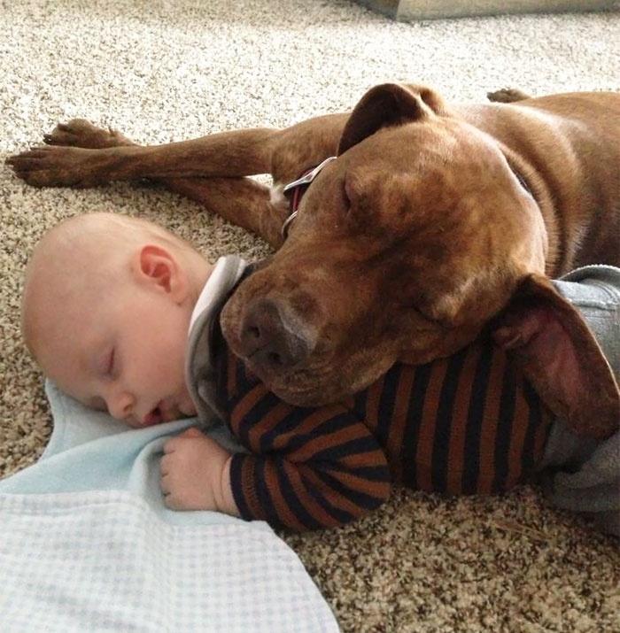 孩子与狗狗在一起睡觉的照片 还有什么比这个更可爱的?(50张) 第9页