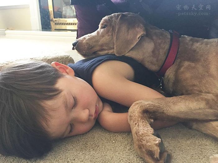 家有三岁小孩可以养狗吗?