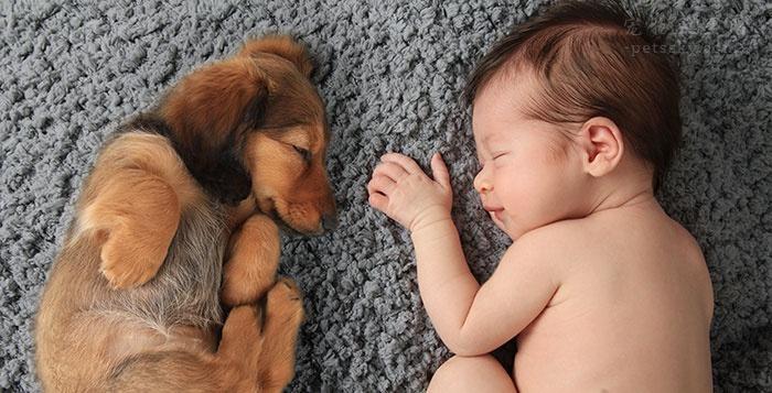 那些怀孕还养宠物的网友,是如何看待别人的冷言蜚语?