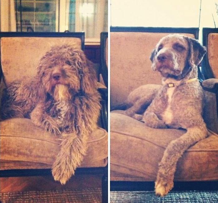 狗狗剃毛前后颜值差距非常大,是一种什么体验?