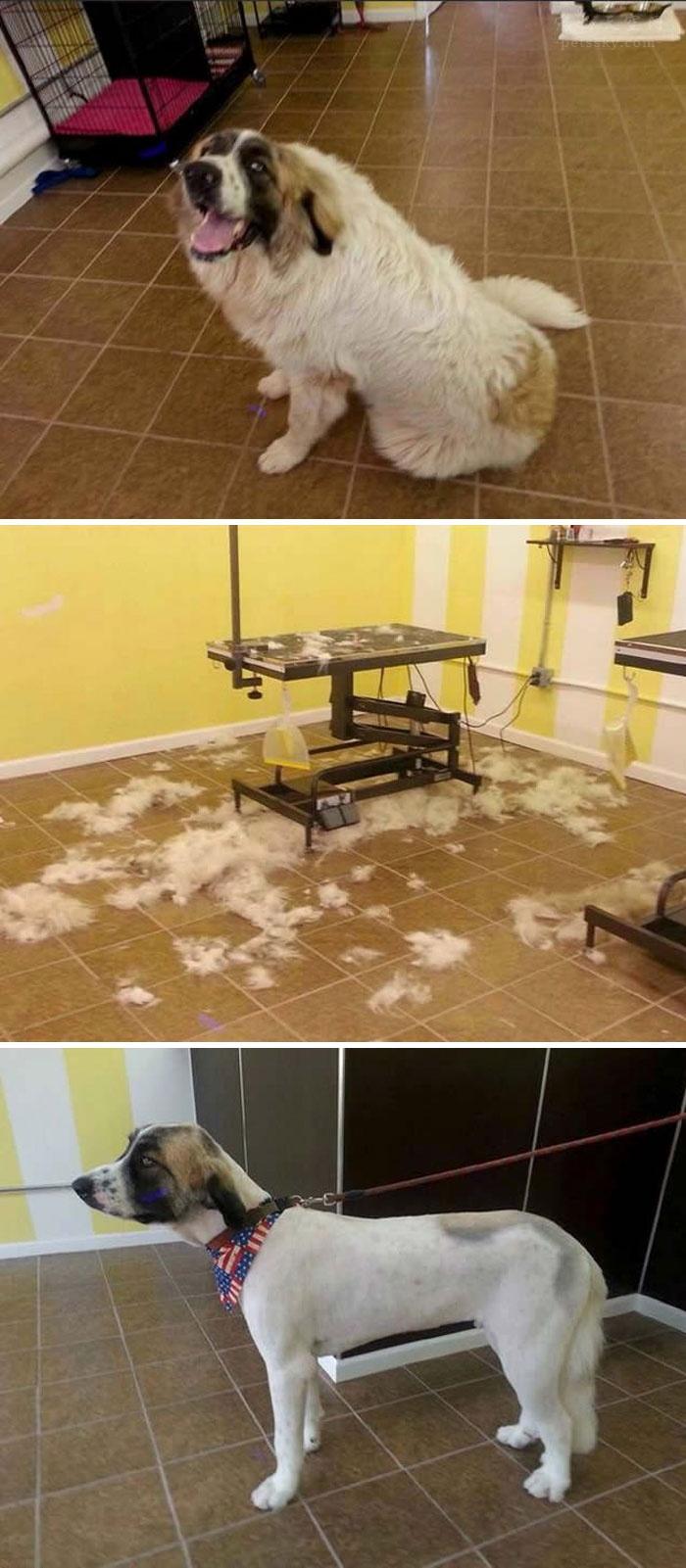 家中满地狗毛,该怎么做卫生?