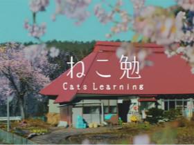 日本一个非常感人的广告:猫咪与独自居住的老奶奶
