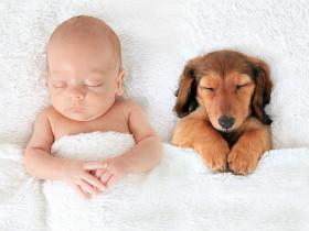 孩子与狗狗在一起睡觉的照片 还有什么比这个更可爱的?(50张)