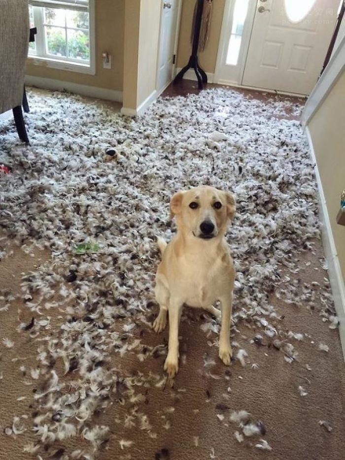 狗狗在家撕咬家具怎么处理?