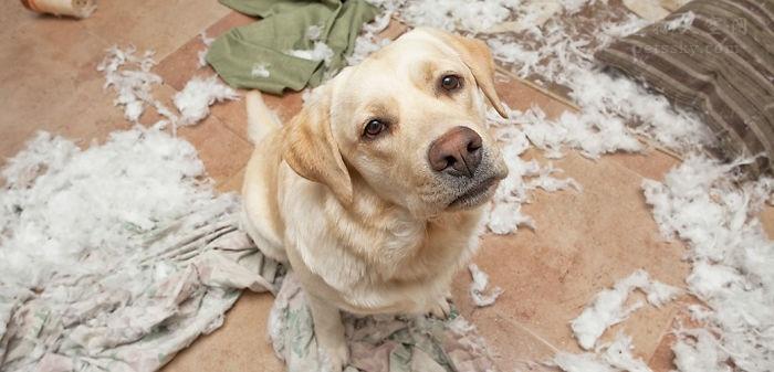养狗前和养狗后会有什么变化?