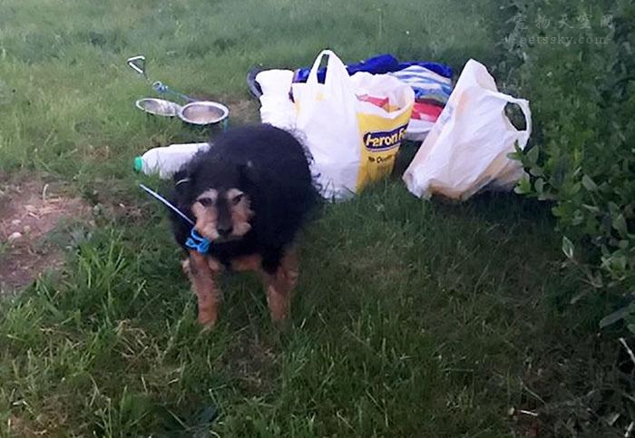 老奶奶在出国定居前将狗狗托付给邻居 邻居无情地将狗狗遗弃