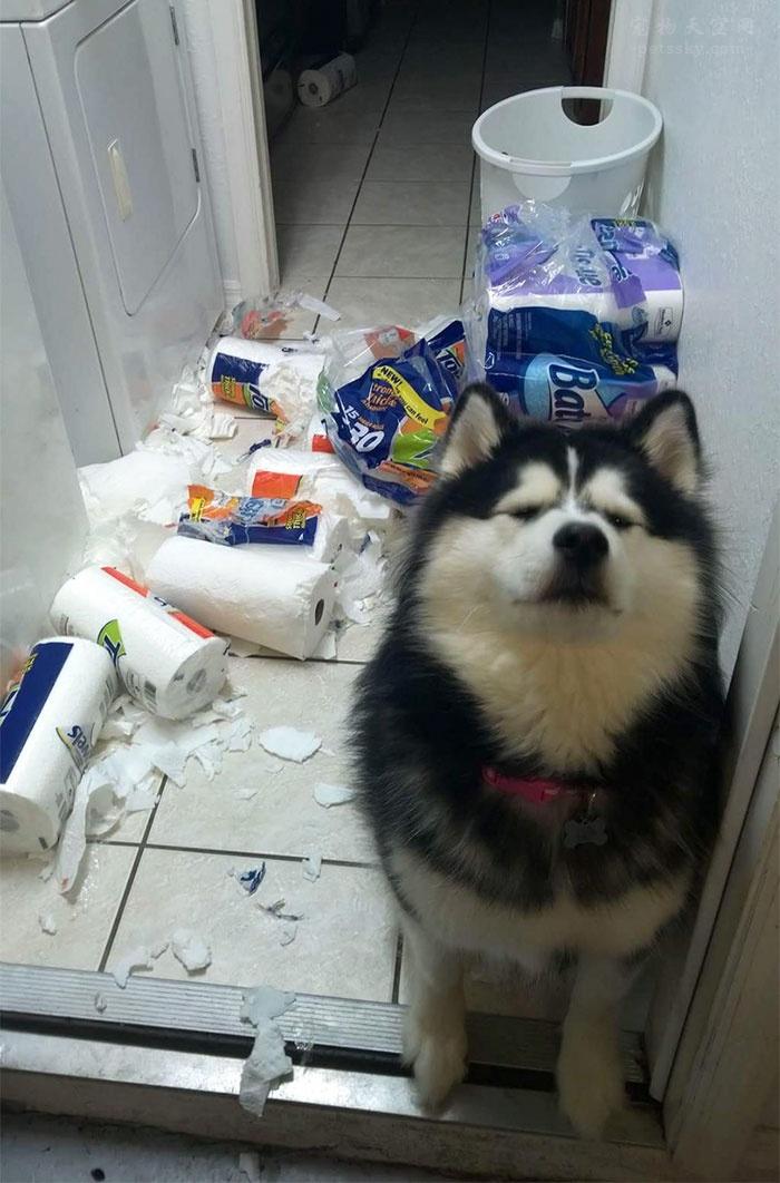 只有养了宠物后,你才会知道的五件事情!