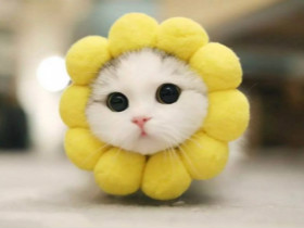 """当动物变得""""圆""""起来的时候 是不是更加可爱一些?(20张)"""