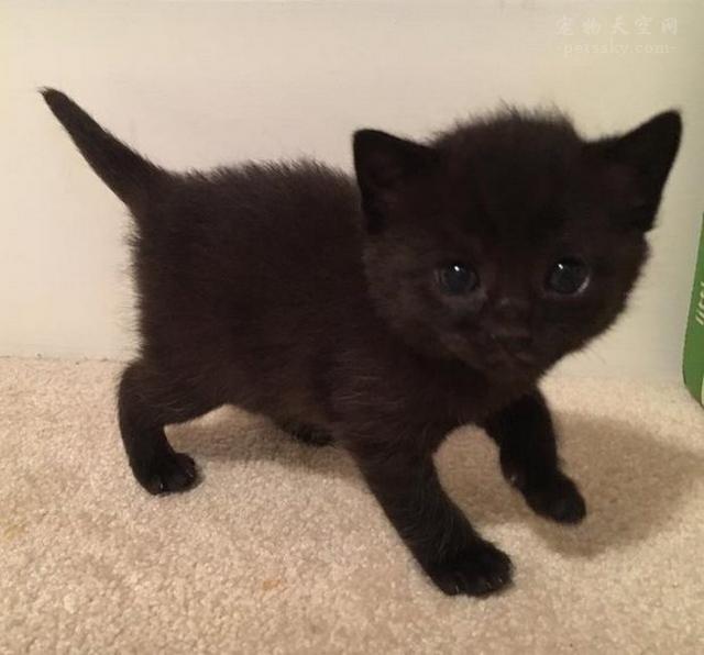处于成长期的小猫咪体重不增加,应该怀疑这3方面