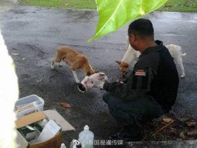 泰国警车在巡逻时流浪狗挡路 母狗叼着受伤小狗求救
