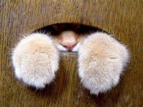 超爱偷窥人的猫咪 就是想看看人类在干啥