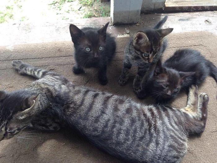 你愿意为怀孕的流浪猫做引产或绝育吗?为什么?