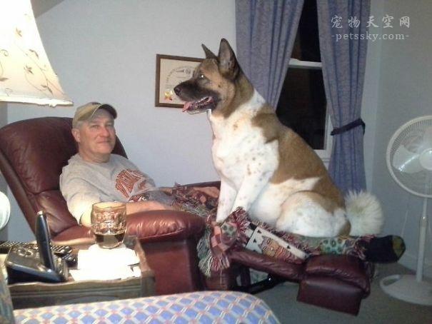 养狗有哪些事是可以做,哪些事是不可以做的?