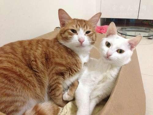 妈妈不让自己养猫,怎么说服妈妈同意养猫呢?