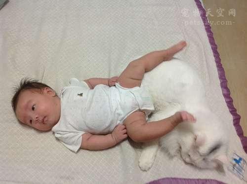 怀孕又养宠物的人,后来生的孩子如何?