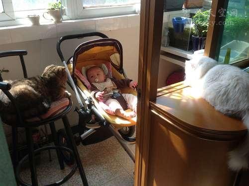 怀孕不是抛弃宠物的理由,怀孕前后养宠物没有太大问题