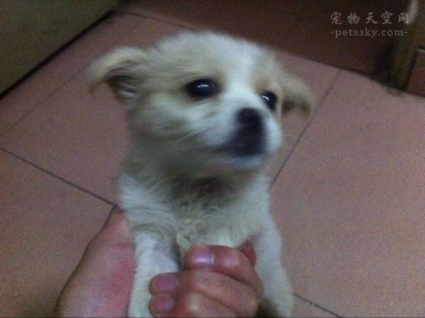 """杭州大爷带中华田园犬办证被拒,""""土狗""""被禁止当宠物养?"""