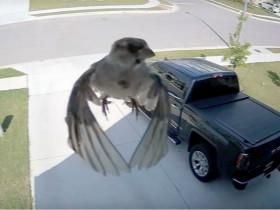 监控拍到了奇怪的镜头:小鸟不用挥舞翅膀,就漂浮在空中?