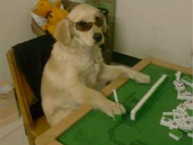 同样都是狗狗,养一只暖汪和一只智障汪的区别绝对不小!