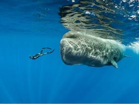 见过鲸鱼睡觉吗?分享一组非常罕见的抹香鲸睡觉照片