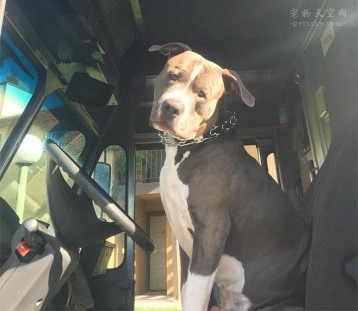 不想让客户的比特犬变得无家可归,她选择给狗狗一个新家