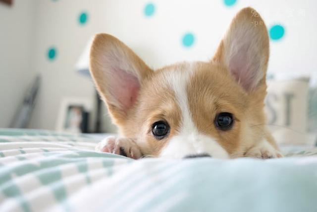 宠物市场越来越好,未来的宠物种类都有哪些?