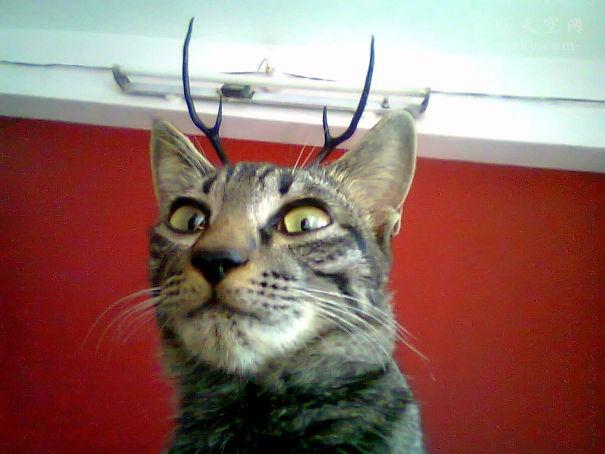你们都给猫起过哪些奇怪的名字?评论区都是人才!