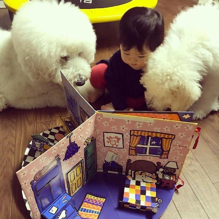 家里养狗狗对小孩好吗?