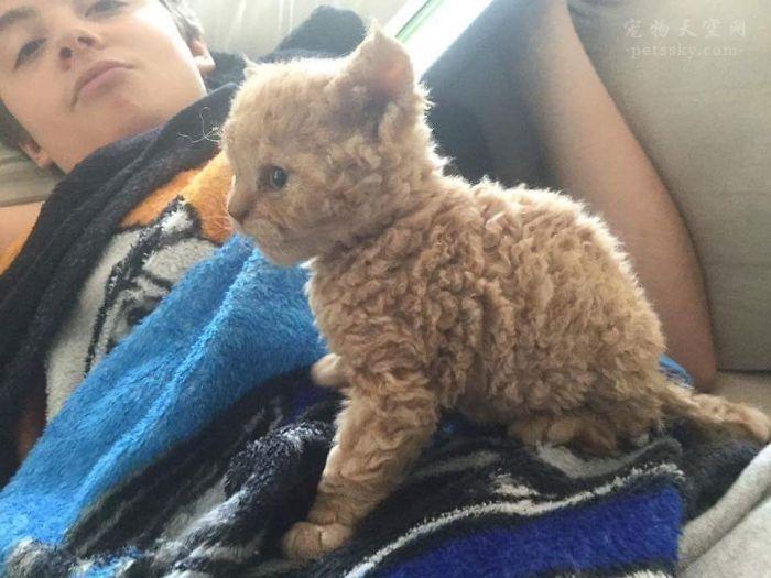 """领养了一只""""自然卷""""的小猫,没想到引发网友的争论"""