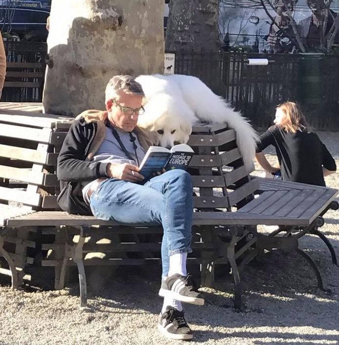 分享一些搞笑狗狗的照片,还有背后的故事(37张)