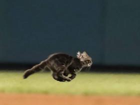 猫咪闯进赛场,打断了正在进行的比赛,男孩自告奋勇捉走猫咪