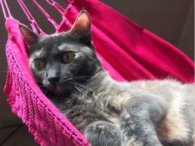 女儿在网上爆照:老爹给猫咪买了个吊床,他们一起晒太阳