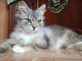 路边发现了一只冻僵的猫咪,救活后,才发现自己捡到了宝