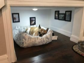 创意:小伙在装修自己家的时候,为狗子单独装建了一个小屋
