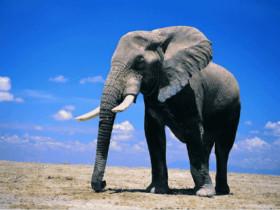 为了一口吃的,大象正在打劫一辆卡车